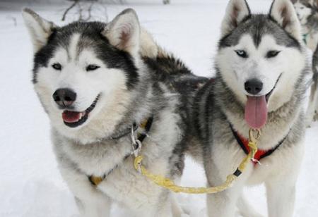 Reindeers, huskies and elves: Top 10 things to see and do in December