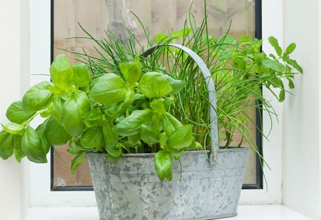 <b> Plant power: </b> Spring plants for every room in the house