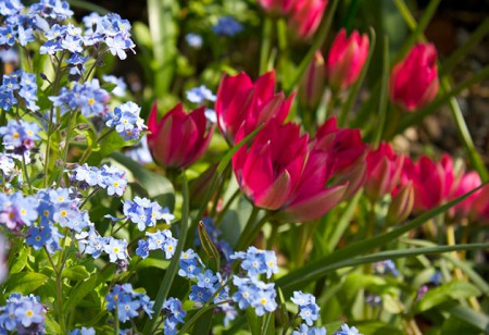 <b> Outdoors: </b> Give your garden an April makeover