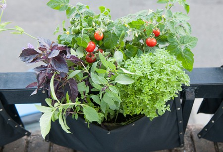<b> Weekend Garden Project: </b> How to make a mini cottage garden on your balcony