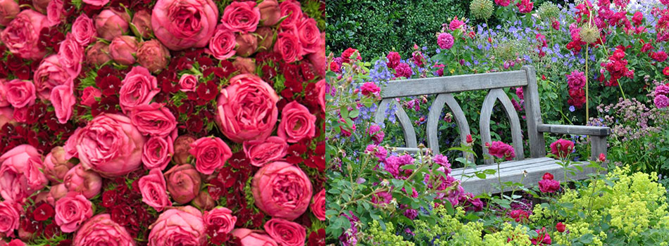<b> Flower Power: </b> Top 5 rose gardens to visit this June