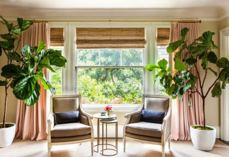 <b> Plant Power: </b> Top 5 houseplants that are easy to live with