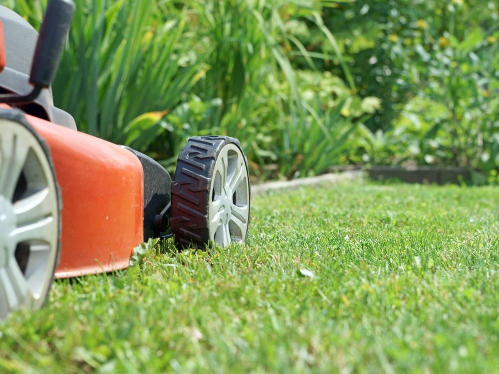 Feb-lawn