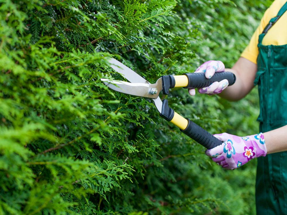 Feb-pruning