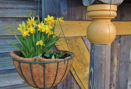 Expert Advice: Seven Garden Tasks for February